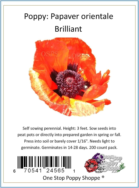 Amazon Com 200 Oriental Poppy Flower Seeds Brilliant Poppies