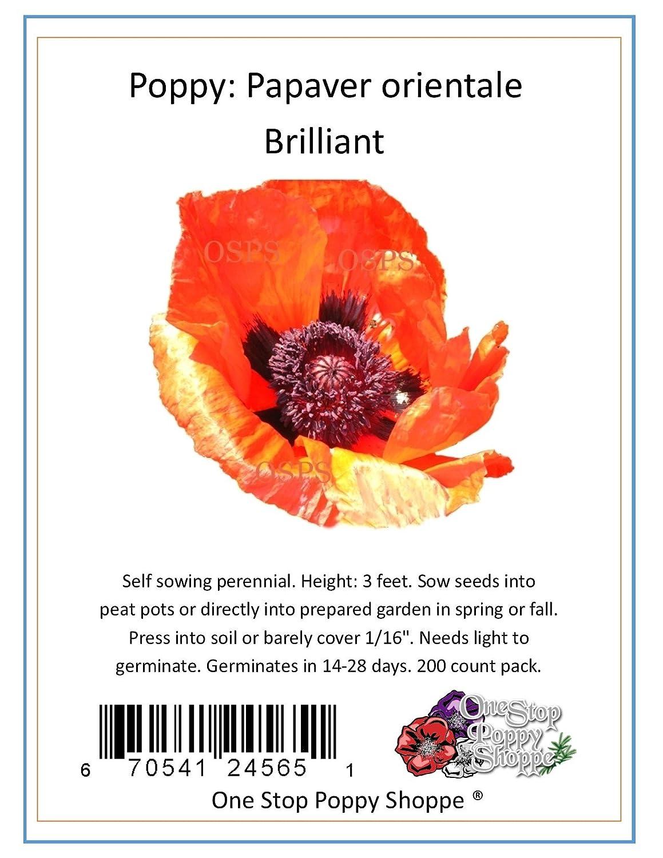 Amazon 200 Oriental Poppy Flower Seeds Brilliant Poppies One