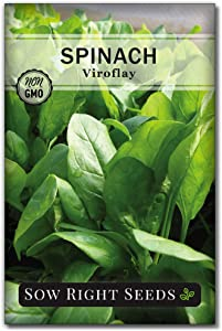 Sow Right Seeds - Viroflay Spinach Seed for Planting - Non-GMO Heirloom Packet with Instructions to Plant a Home Vegetable Garden, Great Gardening Gift (1)