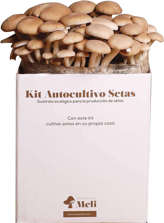 SETAS MELI | Kit Autocultivo Setas Ecológicas de Chopo | Para cultivar en casa | Crece en 10 días | Kit perfecto para regalar | Hecho en España | Kit ECOLOGICO Y RECICLABLE