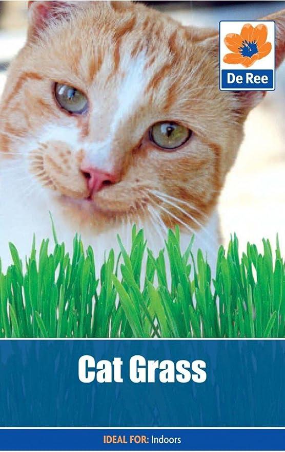 Cat Grass Amazon Co Uk Garden Outdoors