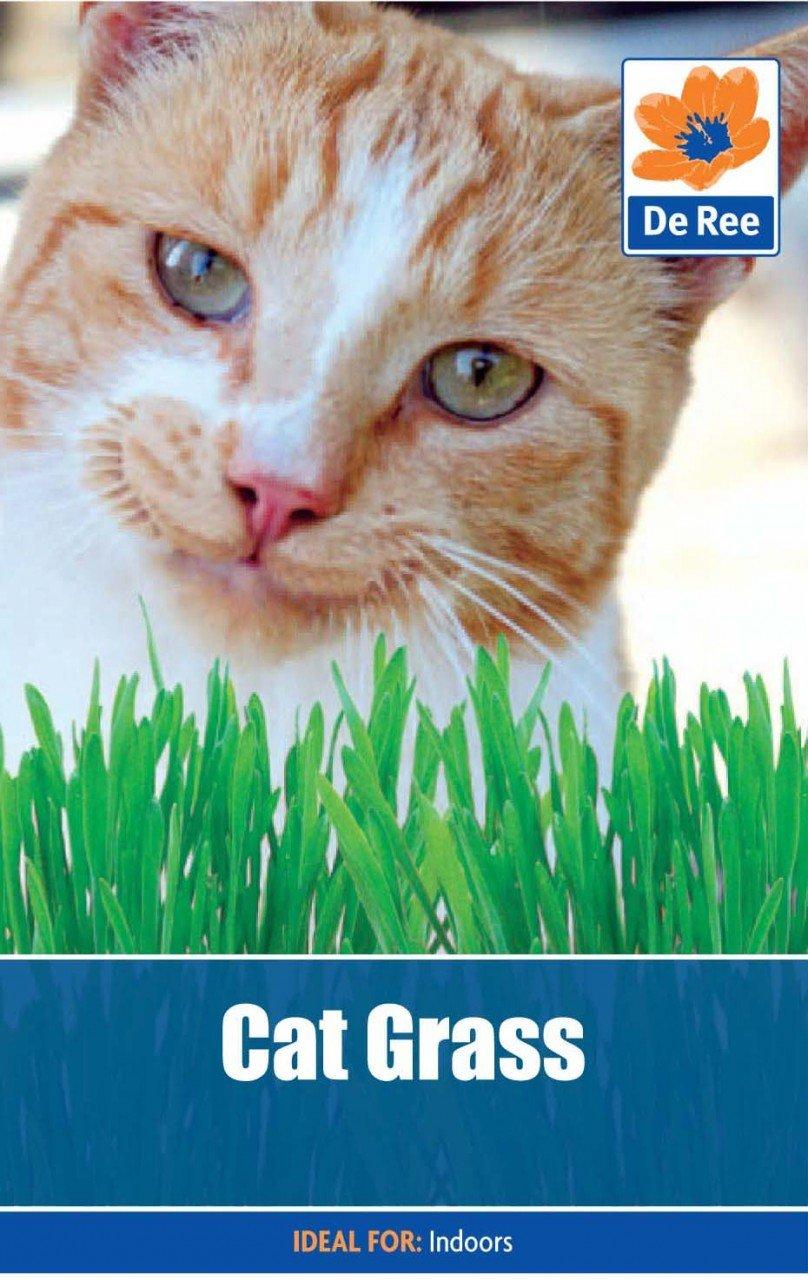 Cat Grass Bulbs and Seeds Direct