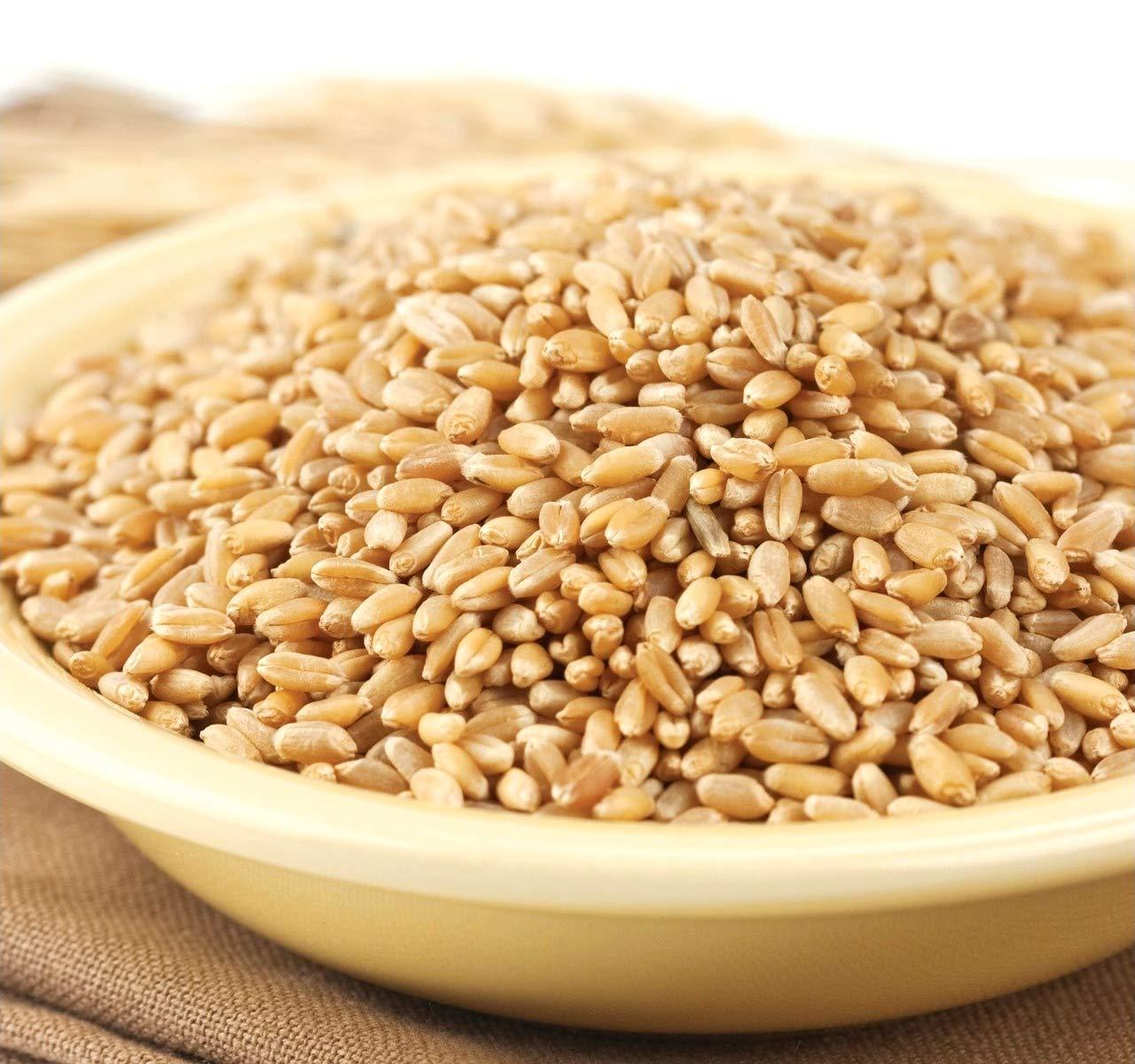 Wheat Montana - Prairie Gold Wheat Berries - 1 pack - 50lb bag by Wheat Montana (Image #2)