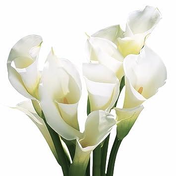 Amazon globalrose 18 fresh open cut white calla lilies fresh globalrose 18 fresh open cut white calla lilies fresh flowers for birthdays weddings or mightylinksfo