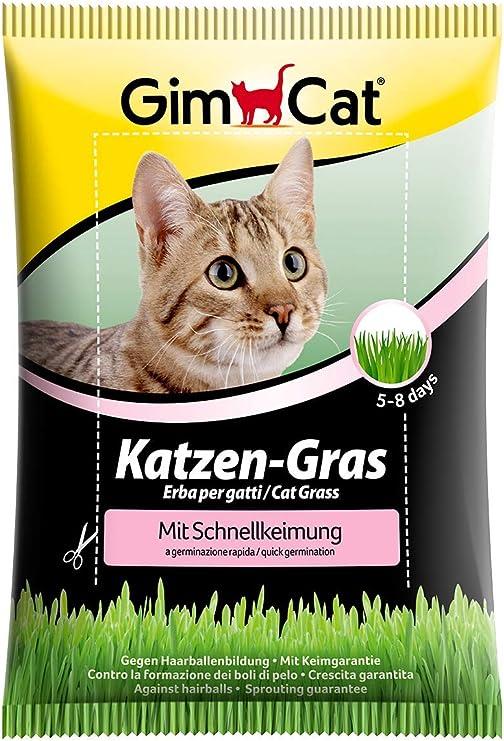 GimCat hierba de rápida germinación para gatos - Hierba para gatos de plantación controlada - De rápido cultivo en 5-8 días - 1 bolsa (1 x 100 g): Amazon.es: Productos para mascotas