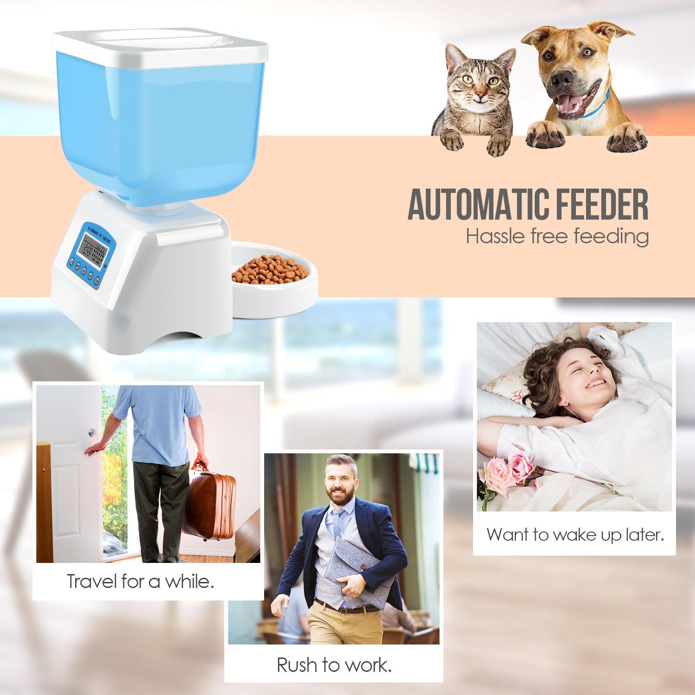 feeder co surefeed timer dog uk amazon dp microchip pet supplies