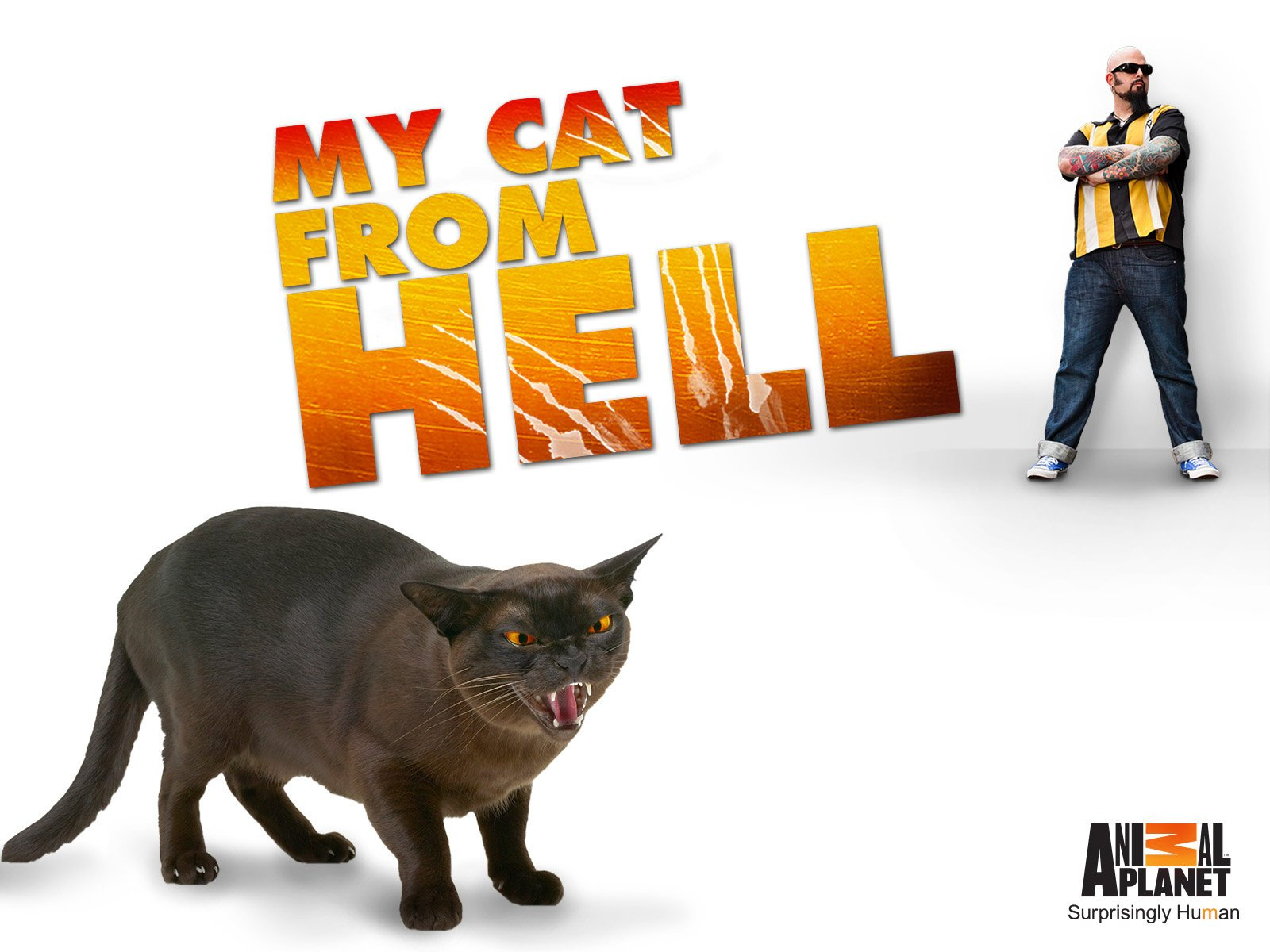 Amazon.com: Watch My Cat From Hell Season 7 | Prime Video