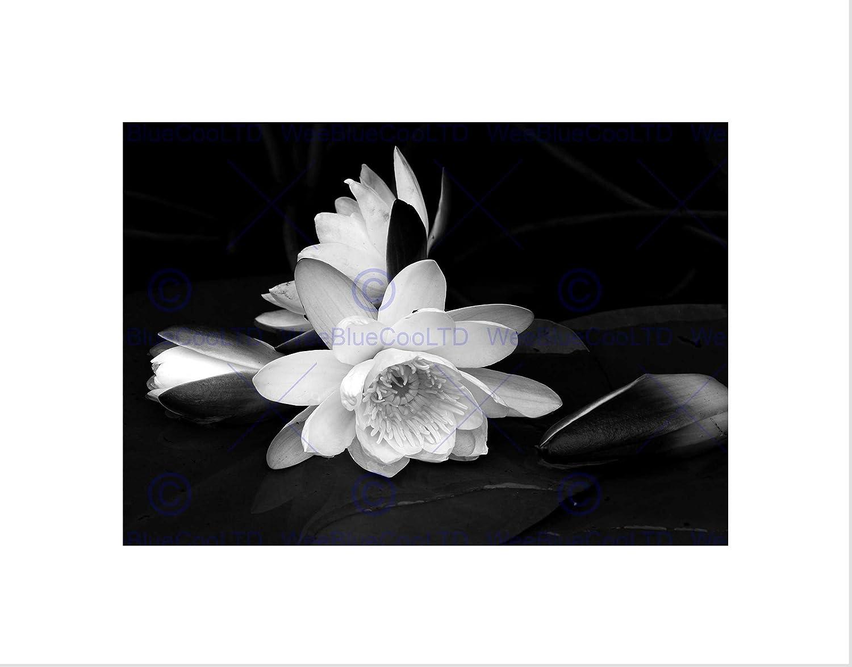 Amazon White Flower Bloom Black Background Framed Art Print