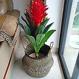 TwinkBling cestino di fiore pieghevole paglia cestino con manico per archiviazione lavanderia giocattoli pianta fiore, cannuccia, Nero, small