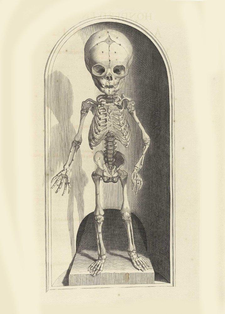 Amazon.de: Vintage Anatomie das menschliche Skelett, Vorderseite ...