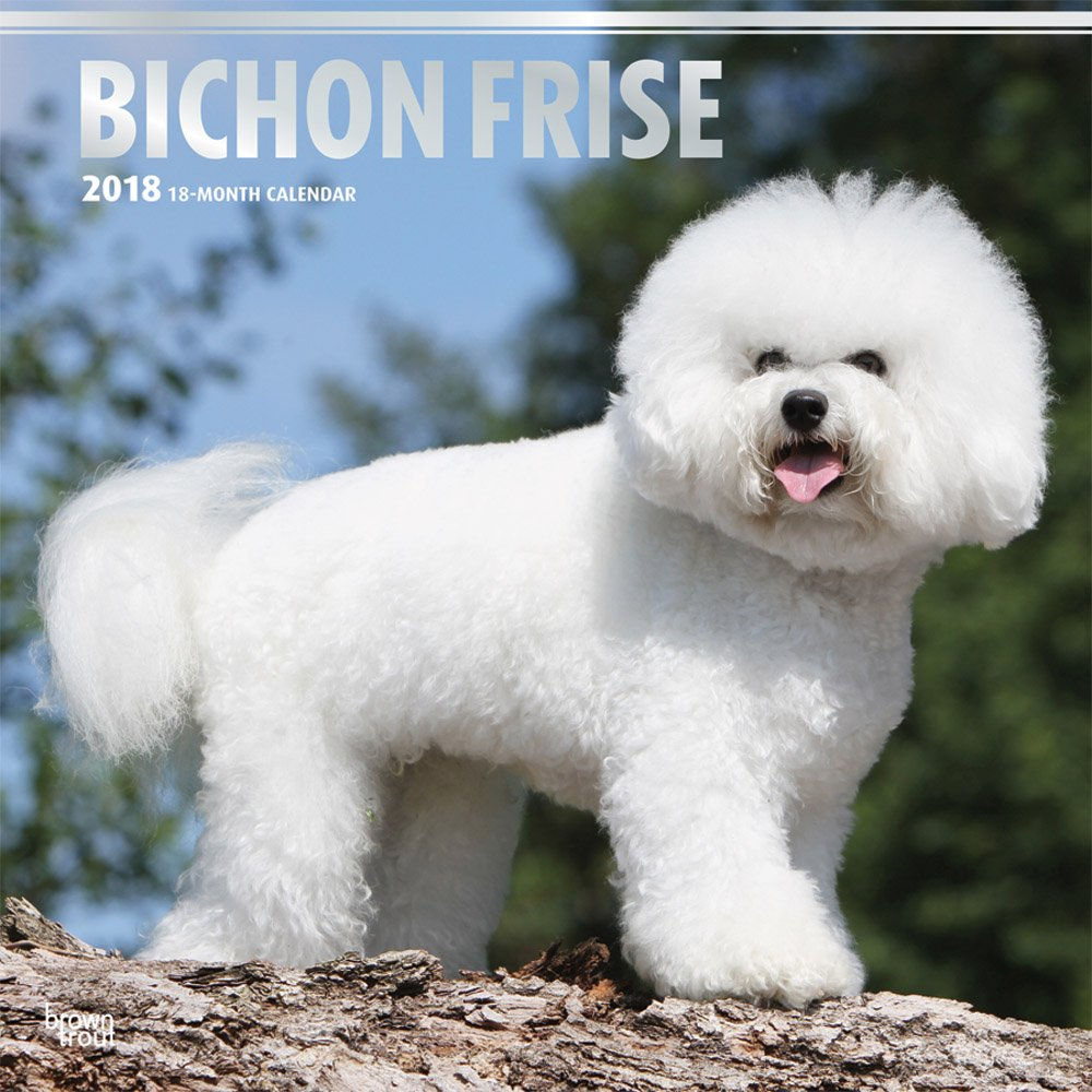 amazon com bichon frise 2018 12 x 12 inch monthly square wall