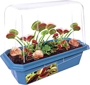 Grow Your Own Frightening Venus Flytraps - Kids Terrarium Kit to Grow Vicious Bug Eating Monsters - Includes Everything Needed for These Fascinating Plants to Flourish