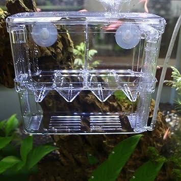 Caja transparente y flotante para acuario. Ideal para alimentar ...