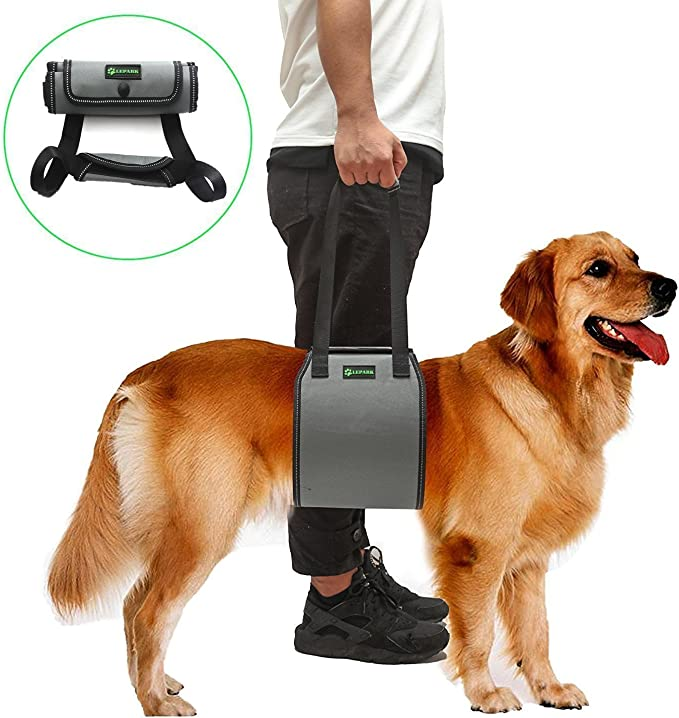 RockPet Soporte para Perros con Manija para la Ayuda Canina ...