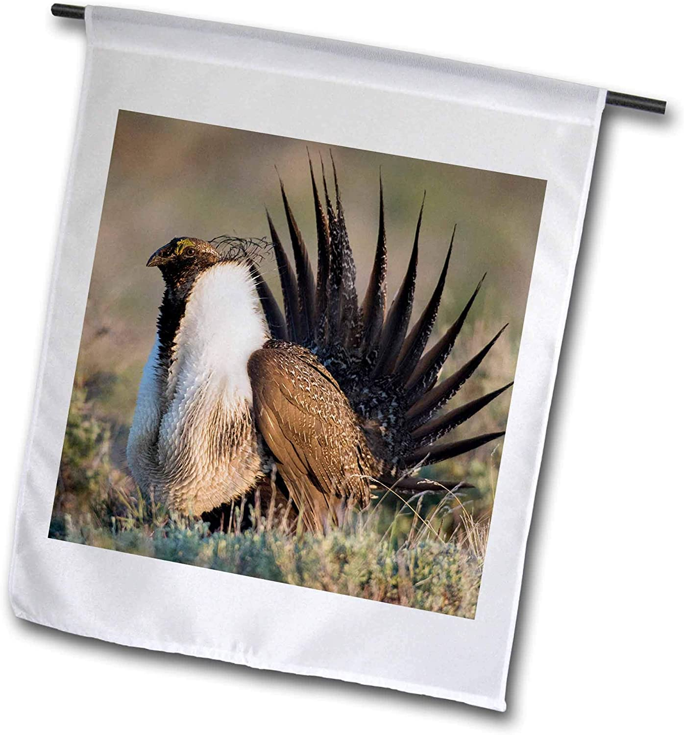 3dRose Danita Delimont - Birds - Sage Grouse, Courtship Display - 12 x 18 inch Garden Flag (fl_313966_1)