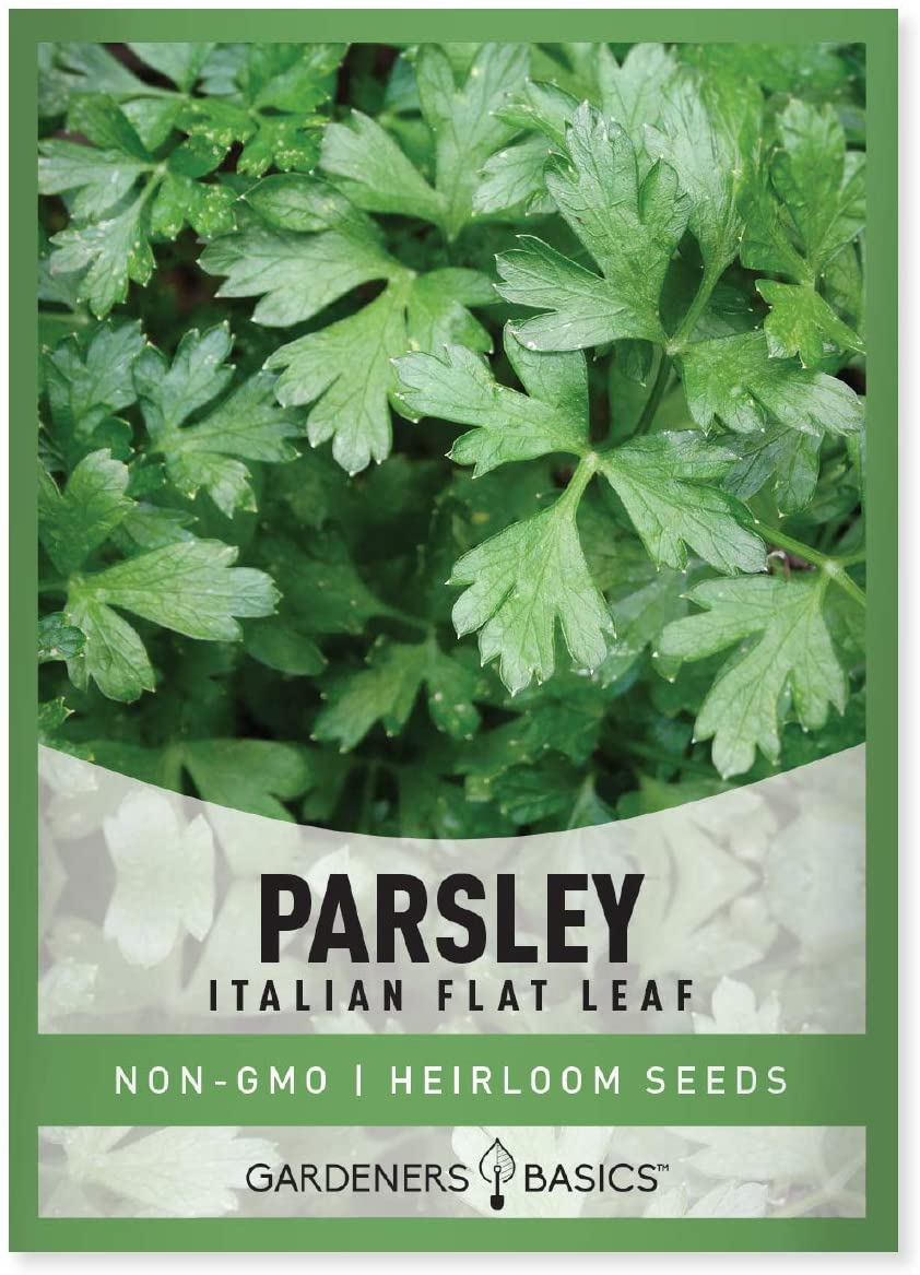 Parsley Seeds for Planting, Italian Flat Leaf is A Heirloom, Open-Pollinated, Non-GMO Herb Variety- Great for Indoor and Outdoor Gardening and Herbal Tea Gardens by Gardeners Basics