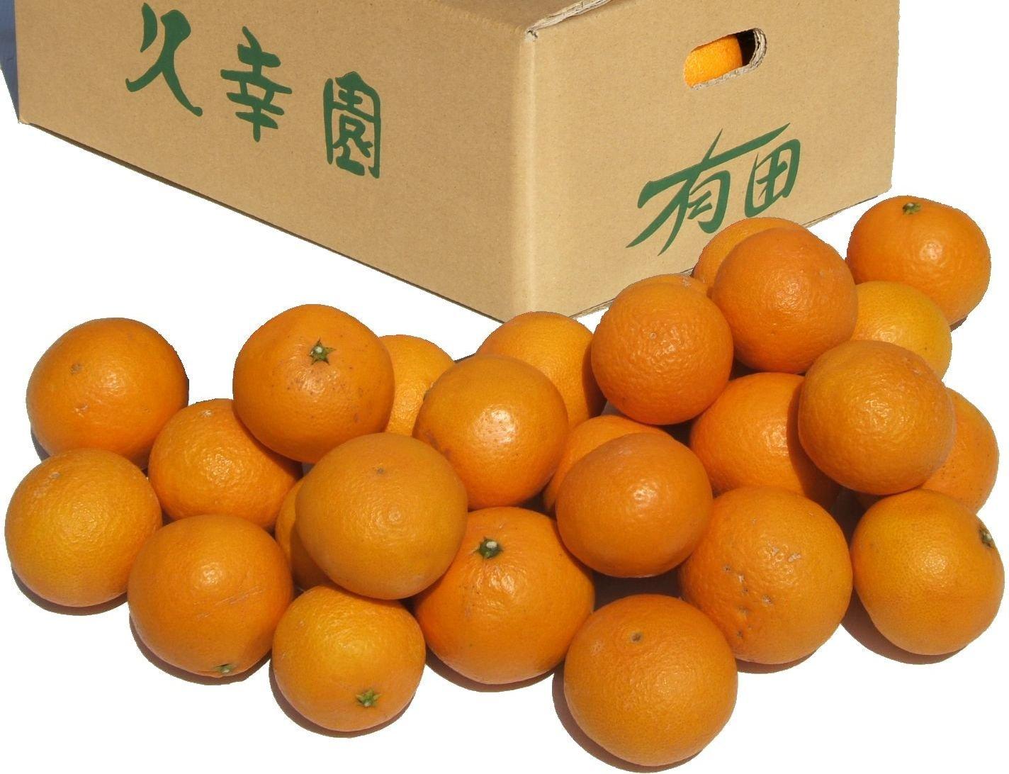 三ヶ日蜜柑 静岡産 約8㎏ 2L~4L 秀品~優品 早生・青島品種リレー 個選果品 貯蔵熟成 みかん