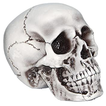 foam skull halloween decoration - Halloween Skeleton Head