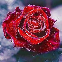 TONVER 5d Diamant kit de Peinture, DIY Diamant Dessin Coloré Fleur Plante Photos Broderie kit de Point de Croix Décoration Murale pour la Maison, Salon (Rose Rouge–20*20cm)