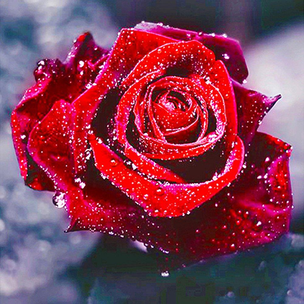 TONVER 5D Kit de pintura de diamantes, bricolaje, dibujo de diamantes, colorido, flores, plantas de bordado, Kit de punto de cruz, decoración de pared para el hogar, sala de estar (rojo rosa, 30 x 30 cm)