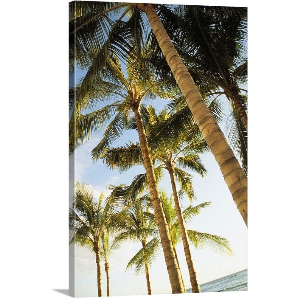 Dana Edmundsギャラリー‐ハワイ、オアフ島、ワイキキ、多くPalm Trees againstブルースカイfrom Below 32