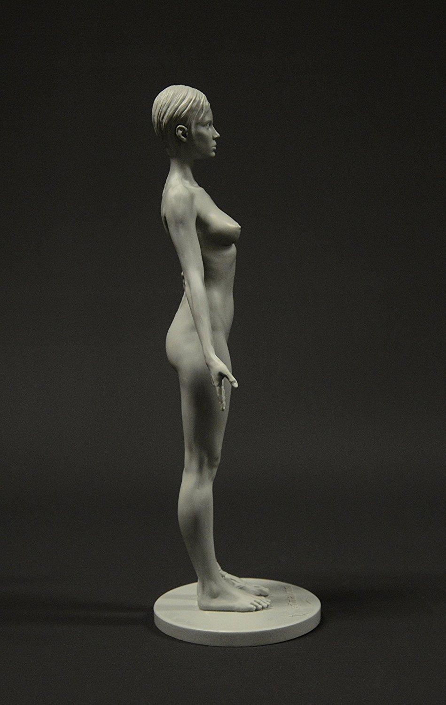 Amazon.com: Female Anatomy Figure: 10.5-inch Anatomical Reference ...