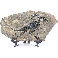 H&W Creative Vintage Dinosaur Specimen Fossil - Resin Deinonychus Model - Study Office, Bookshelf Desk, Wine Cabinet…