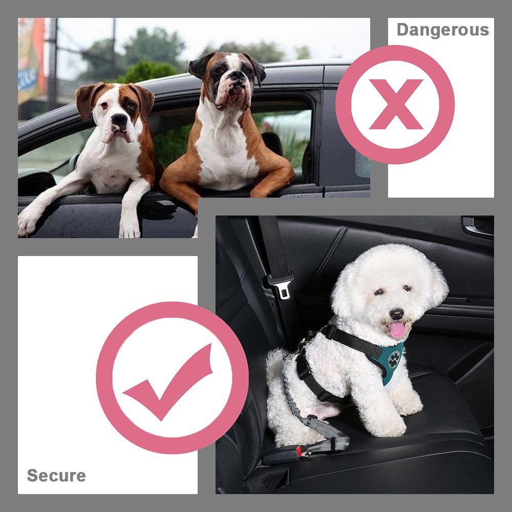 Slowton Double Dog Car Seatbelt, Dual Pet Vehicle Safety Seat Belt Adjustable Double Dog Coupler Lead Splitter with Elastic Bungee and Reflective Stripe for Two Pets Car Trip Travel
