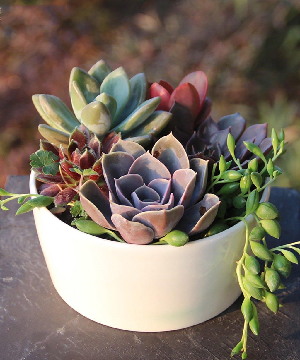 Creativo Fiori Contenitore Ceramica Vaso da fiori semplici Piante succulente creativi Pot balcone in vaso piante da fiore vaso bianco ( colore   A3 , dimensioni   12.512.56cm )