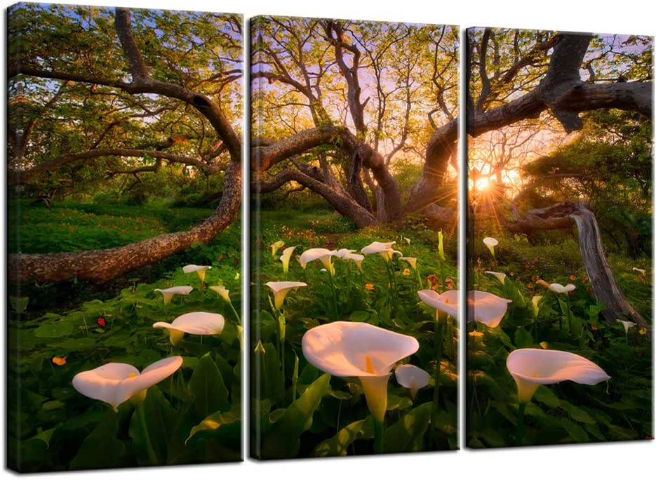 Nachic Wall Large 3 Piece Canvas Wall Art California Calla Lily Flower at Nice Sunset Picture Canvas Painting Nature Forest Tree Landscape Artwork with Wood Frame for Home Living Room Farmhouse Decor