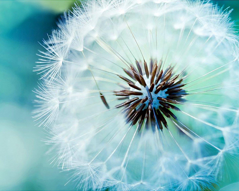 5D Pintura por Diamantes (ITM25655) flor