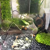Senzeal 2X Aquarium Glass Shrimp Feeding Dish Bowls Reptiles Water Food Dish Feeder Bowl Round