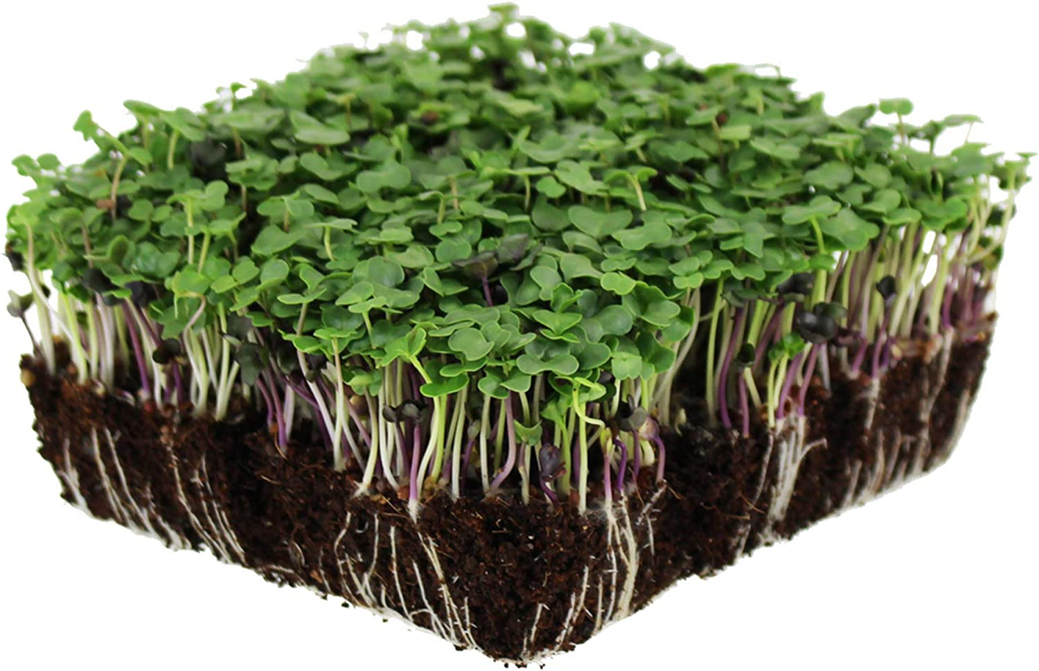 Basic Salad Mix Microgreens Seeds | Non-GMO Micro Green Seed Blend | Broccoli, Kale, Kohlrabi, Cabbage, Arugula, & More (5 Pounds)