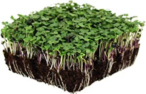 Basic Salad Mix Microgreens Seeds | Non-GMO Micro Green Seed Blend | Broccoli, Kale, Kohlrabi, Cabbage, Arugula, & More (1 Pound)