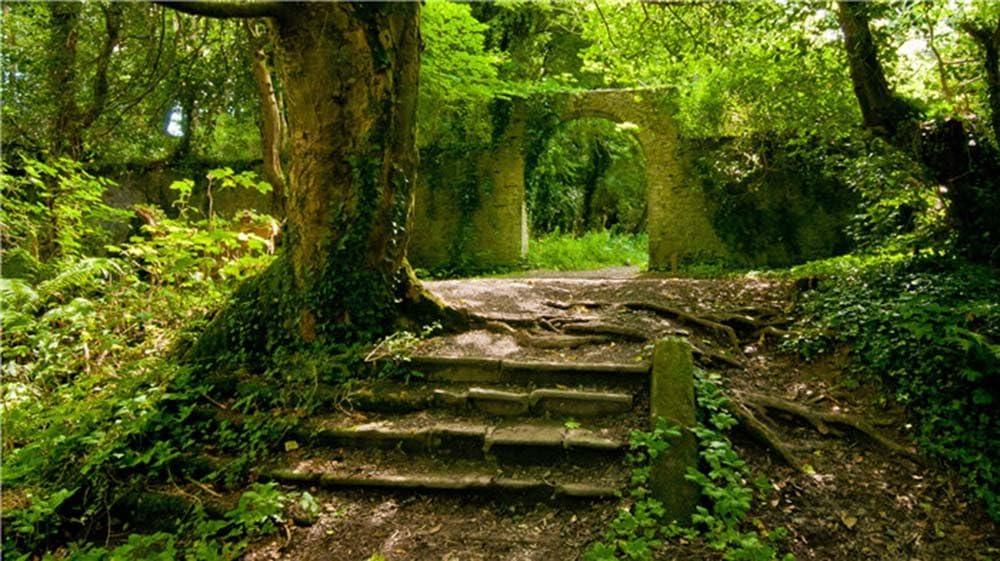 Cuadro sobre Lienzo – Jardín Árbol Escalera Entrada Raíz Calmante Naturaleza Fotografía Pared Impresións – 120X65 cm: Amazon.es: Hogar