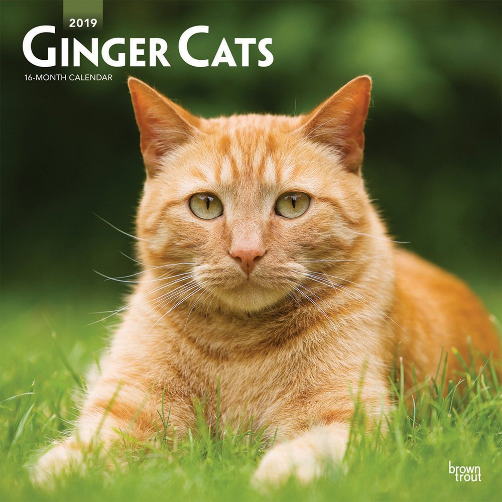 Ginger Cats 2019 12 x 12 Inch Monthly Square Wall Calendar, Animals Cats Ginger