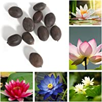 Trenton 10Pcs Water Lotus Flower Plant Bowl Pond Bonsai Suitable Seeds for Home Garden Yard Decor (Mixed Color)