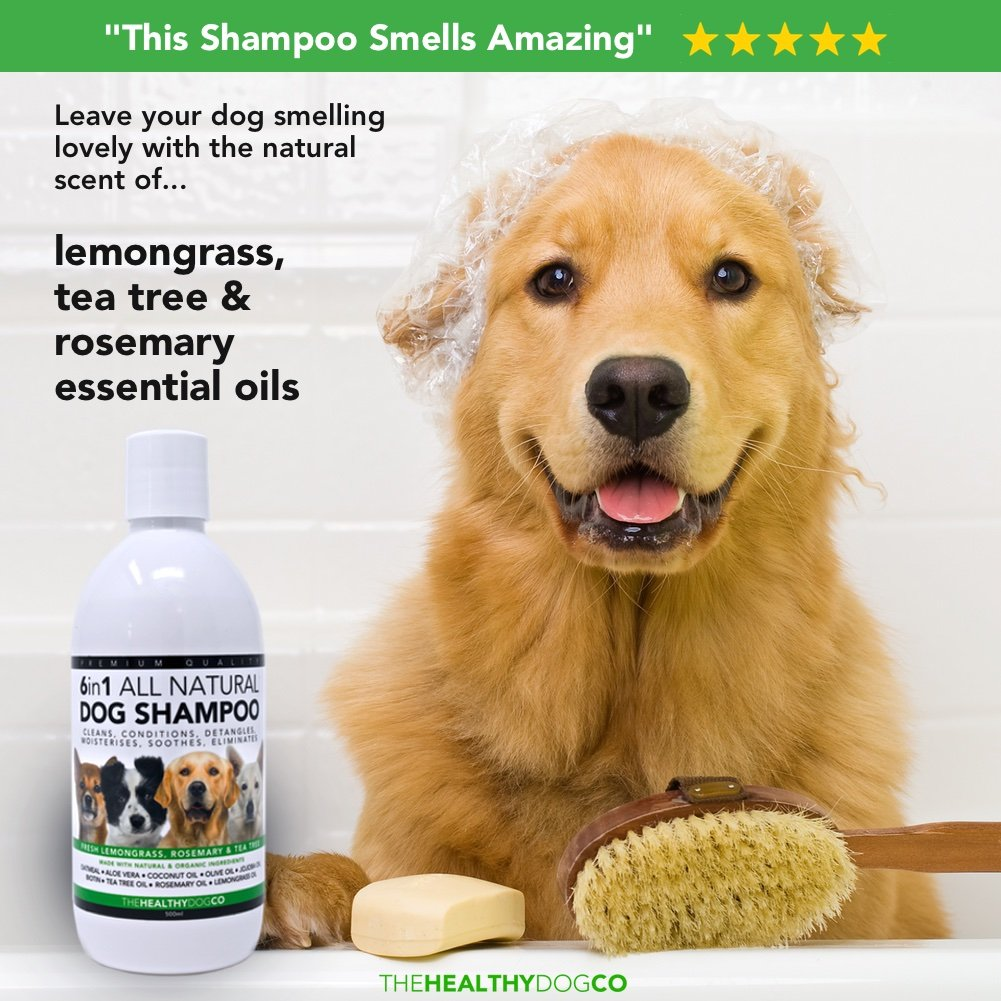 Shampoing 6 en 1 Chien 100 % Naturel | Citronnelle, Romarin & Arbre à Thé | 500ml | Le Meilleur Nettoyant pour des Chiens en Bonne Santé
