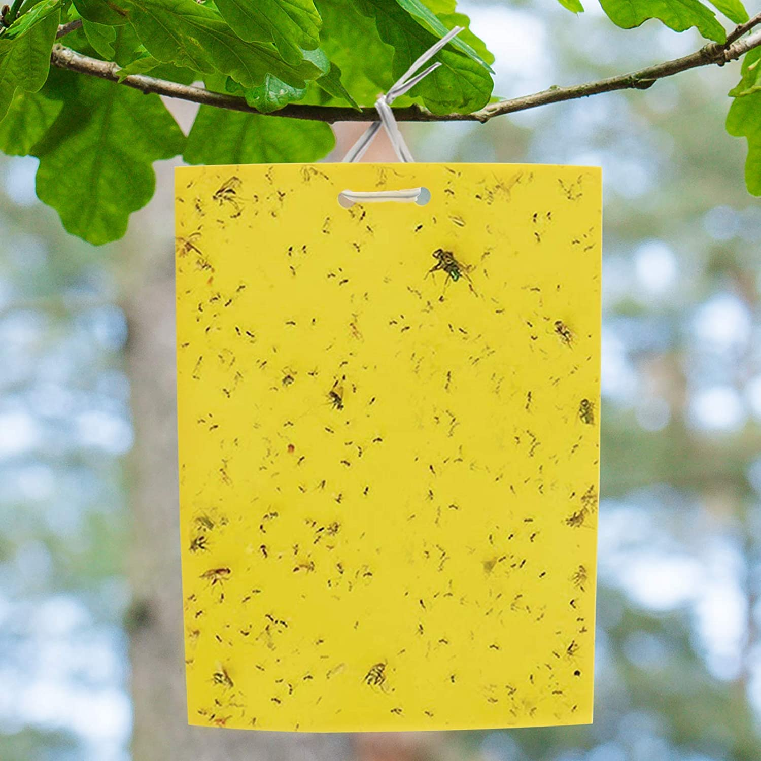 50 Pcs Sticky Fly Trap Paper Yellow Traps Fruit Flies Insect Glue Catcher Set