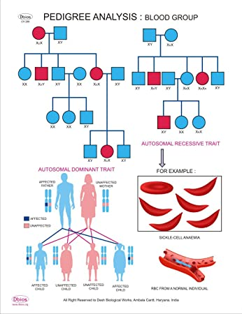blood group chart