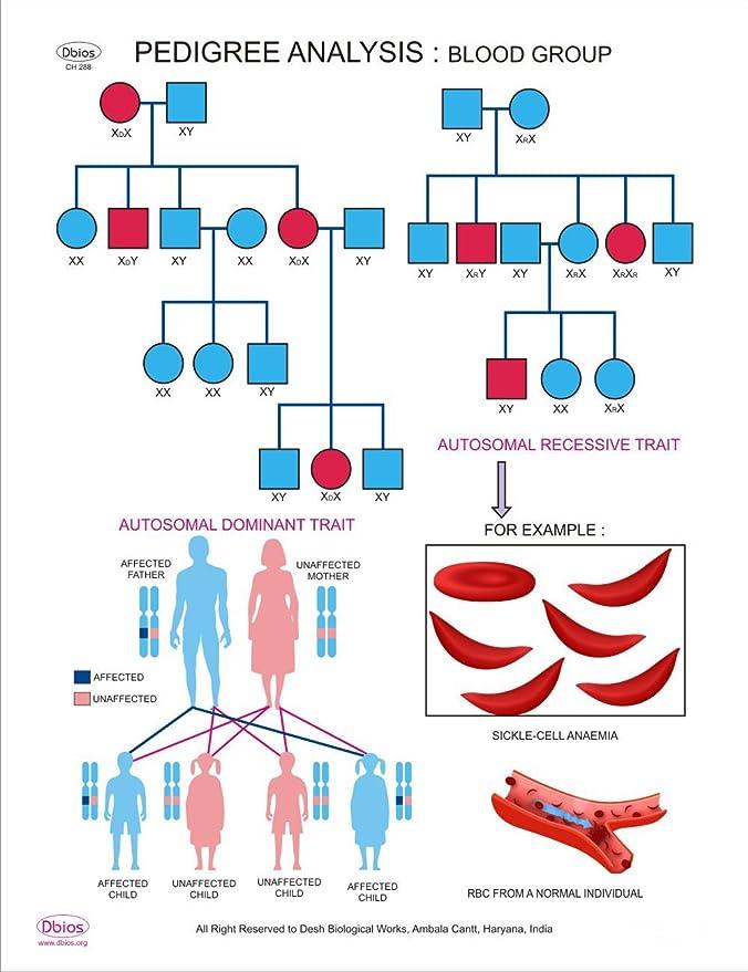 Dbios Digital Print Pedigree Analysis-Blood Group Bildung Biologic ...
