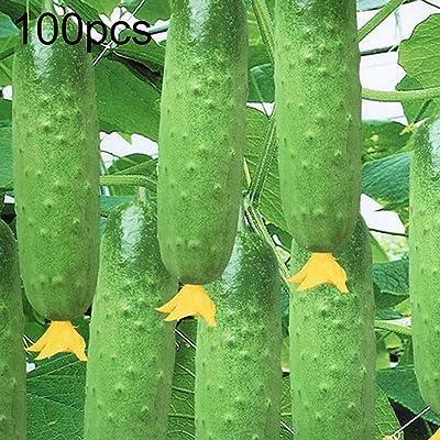 wpOP59NE 100Pcs Cucumber Seeds Pickling Vegetable Fruit Home Garden Yard Plant Decor - Cucumber Seeds Plant Seeds : Garden & Outdoor