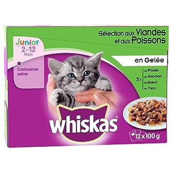 Whiskas – Comida en jalea Junior en los para gato – 12 x 100g