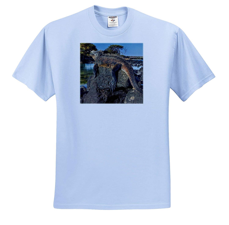 ts/_314358 Adult T-Shirt XL Ecuador 3dRose Danita Delimont Marine Iguana Galapagos Islands Reptiles