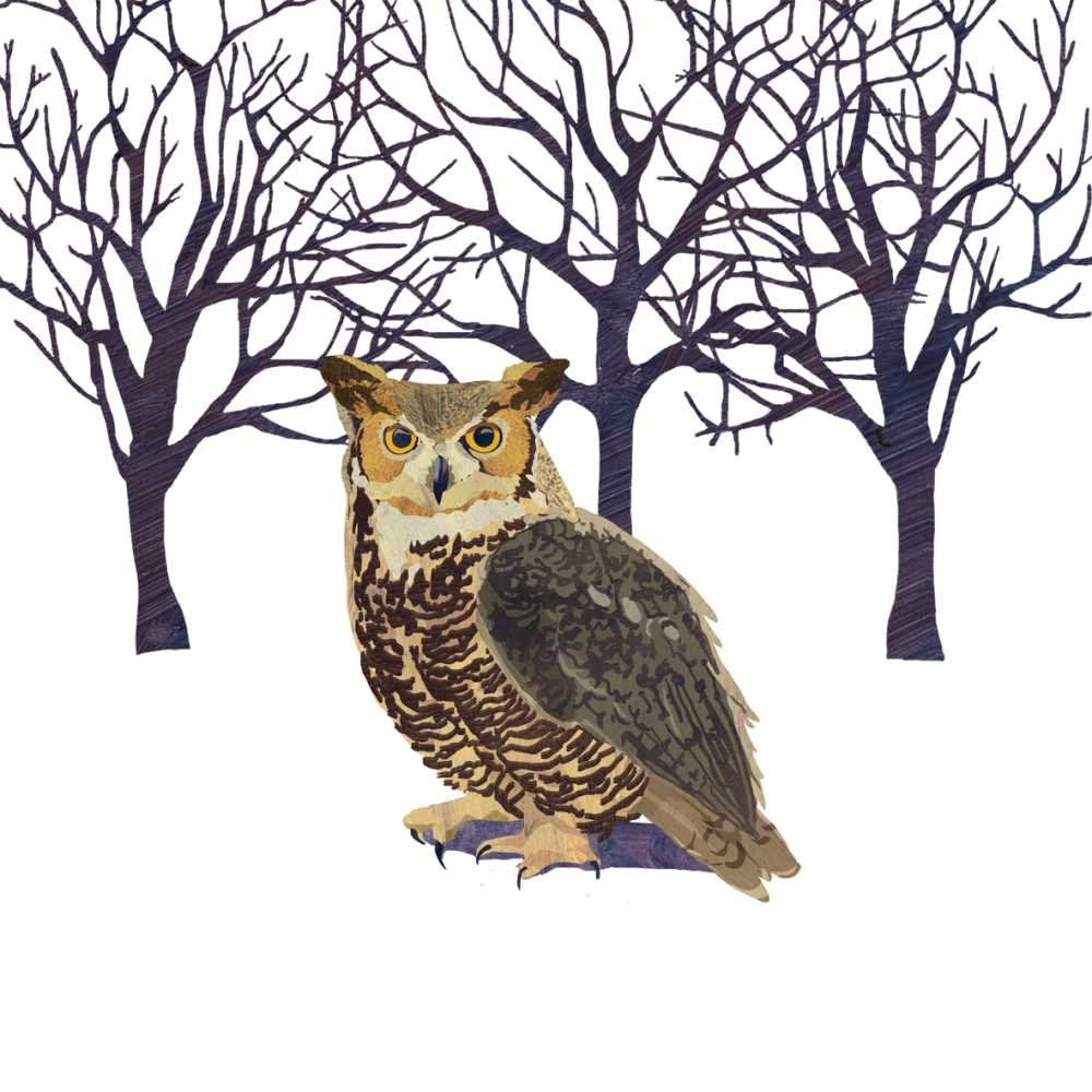 Paperproducts Design Paper Winter Solstice Owl Luncheon Napkins (Set of 20)
