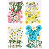 EXCEART 35PCS Mixed Dried Flower Real Pressed Flower Plants Specimen Embossing Art Craft Dried Flower for Home Shop Blue