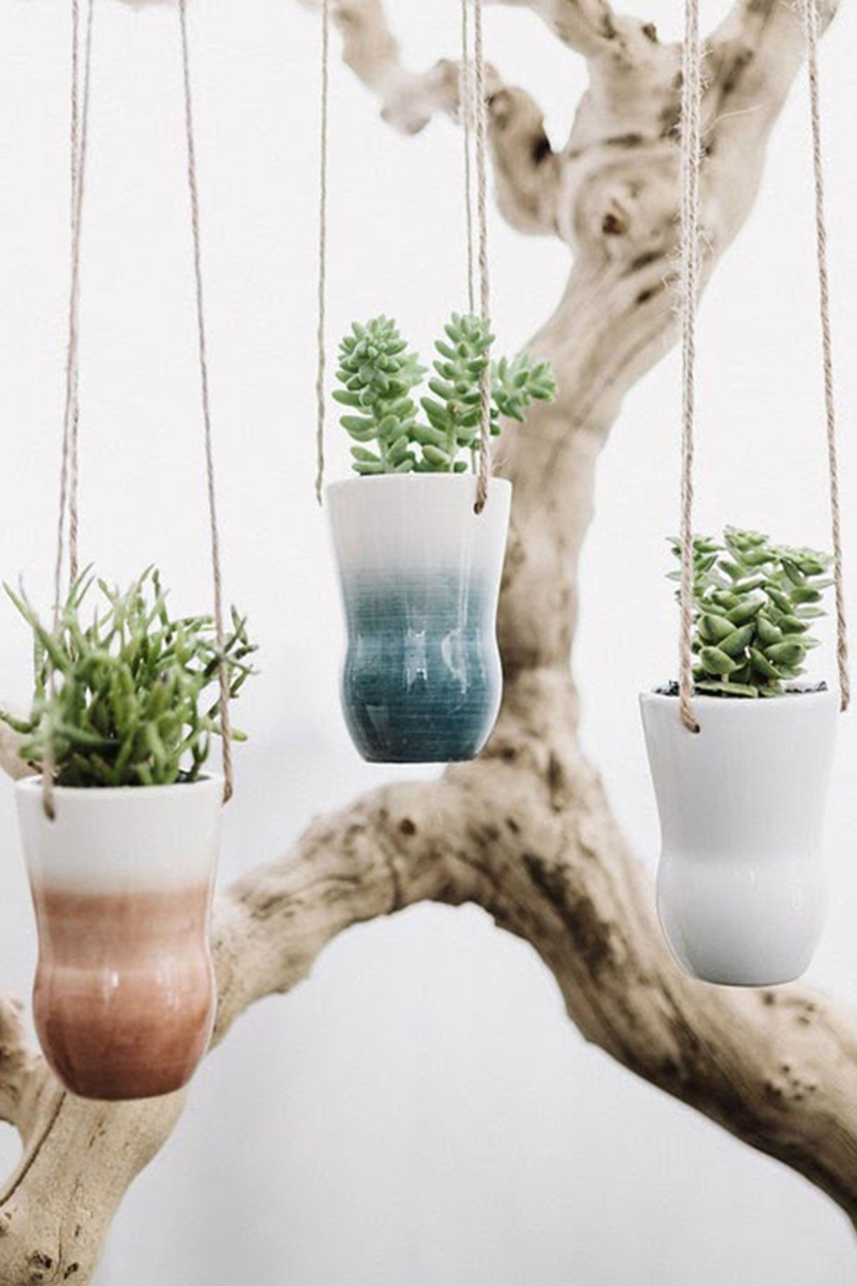 Color Washed Hanging Succulent Planter, 3in pot with Live Plant Houseplant Home Decor