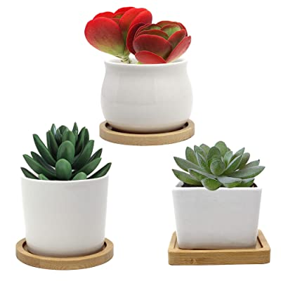 JUCCINI Mini Flower Pots with Drainage Hole ~White Garden Pots with Bamboo Tray~ Ceramic Small Cactus Plant Pots for Indoors Outdoor Home Garden Kitchen Decor ~Small Succulent Pots ~(White, 3 Pack): Garden & Outdoor
