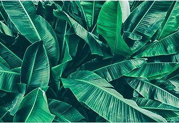 Amazon Com Dorcev 8x6ft Green Leaves Wall Backdrop Tropical