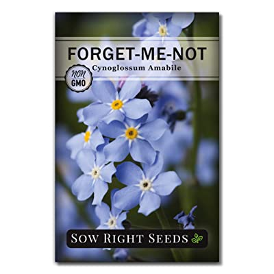 Sow Right Seeds - Forget-Me-Not Seed Packets to Plant (Cynoglossum amabile) - Full Instructions for Planting and Growing a Flower Garden; Non-GMO Heirloom Seeds; Wonderful Gardening Gift (1) : Garden & Outdoor